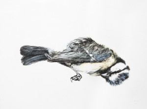 La mésange, pointe sèche sur estampe numérique, 30x40 cm, 2013