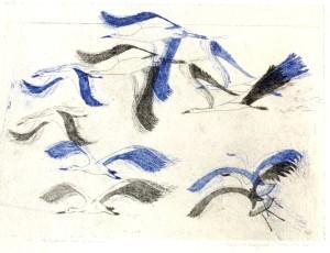 Migration-les cigognes-